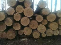 Круглый лес - фото 2