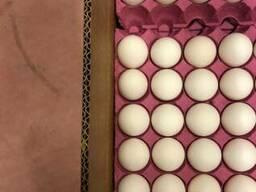 Куриное яйцо класс С1/С0