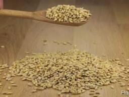 Ячмень, Кукуруза, - фото 2