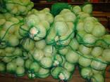 אני אמכור סיטוני כרוב בקזחסטן - photo 2
